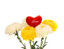 Bouquet of chrysanthemums Stock Images