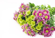 Bouquet of chrysanthemums Stock Photography
