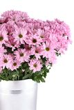 Bouquet of Chrysanthemums Stock Image