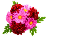 Bouquet of chrysanthemums. Stock Photo