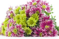 Bouquet of chrysanthemums blur Royalty Free Stock Photos