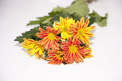 Bouquet of chrysanthemums. A bouquet of colorful chrysanthemums Royalty Free Stock Photography