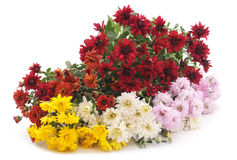 Bouquet of chrysanthemums. Royalty Free Stock Photos