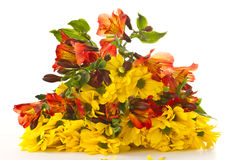 bouquet of chrysanthemums and gerberas Royalty Free Stock Photos