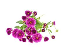 Bouquet of chrysanthemums isolated on white Stock Images
