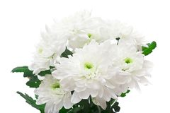 Bouquet of chrysanthemums isolated on white Royalty Free Stock Photos