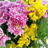 A bouquet of chrysanthemums and mimosa close-up with green leaves royalty free stock photo