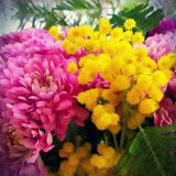 A bouquet of chrysanthemums and mimosa close up with green leaves royalty free stock photography