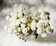 Bouquet of chrysanthemums. Bouquet of white beautiful chrysanthemums Stock Image