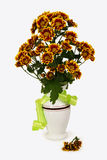 Bouquet of chrysanthemums in a white vase. On the white background Royalty Free Stock Photos