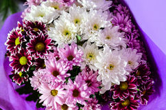 Bouquet. Close up of Bouquet of  white   and purple daisy flowers Stock Photo