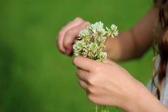 Bouquet of clover Stock Photos