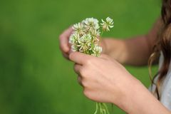 Bouquet of clover in girls hands Stock Photography