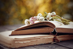 Bouquet of a clover lies on books. Stock Images