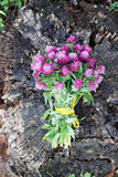 Bouquet of clover, top view. Beautiful bouquet of wild flowers clover stock image