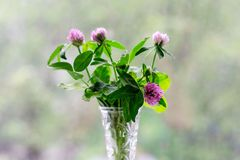 Bouquet of clover in a vase on bokeh background with a pattern of sunlight. Postcard concept stock photography