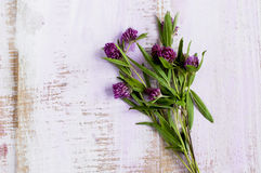 Bouquet of clover Stock Photography