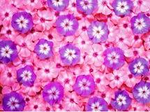 Bouquet coloré de fleur, fond de fleurs Image stock