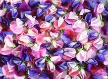 Bouquet coloré de fleur, fond de fleurs Images stock