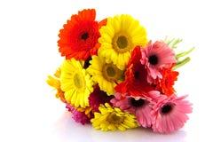Bouquet coloré de Gerber Image stock