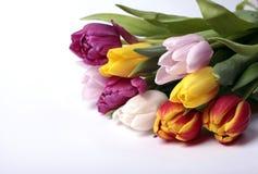 Bouquet coloré des fleurs fraîches de tulipe de source Photo libre de droits