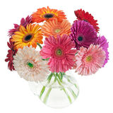 Bouquet coloré des gerberas Images libres de droits