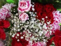 Bouquet coloré lumineux de fleur d'oeillet avec des souffles de bébé étroitement  images libres de droits