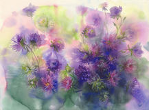 Bouquet of color asters watercolor background royalty free illustration