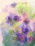 Bouquet of color asters watercolor background Stock Photos