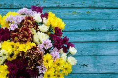 Bouquet of color chrysanthemums on a blue background. royalty free stock photography