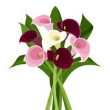 Bouquet of colored calla lilies. Bouquet of purple, pink and white calla lilies on a white background Royalty Free Stock Image