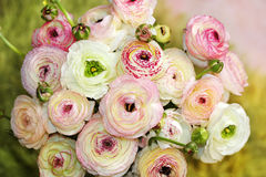 Bouquet of colored peonies Stock Images