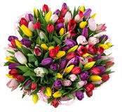 Bouquet of colored tulips on isolated background Royalty Free Stock Image