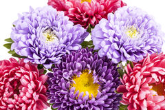 Bouquet of colorful aster flowers Stock Photo