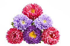 Bouquet of colorful aster flowers on white background Stock Photos