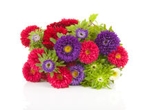 Bouquet of colorful Asters flowers Royalty Free Stock Photo