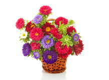Bouquet of colorful Asters flowers in cane basket Stock Photography