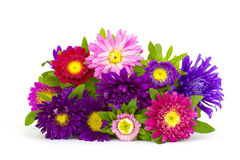 Bouquet of colorful asters flowers Royalty Free Stock Photography