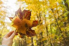Bouquet Colorful autumn leaves stock image