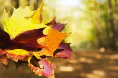 Bouquet Colorful autumn leaves stock photography