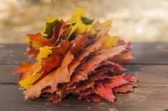Bouquet Colorful autumn leaves royalty free stock photography