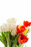 Bouquet of colorful blurry spring tulips on white background Stock Photos