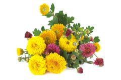 Bouquet of colorful chrysanthemum Stock Photography