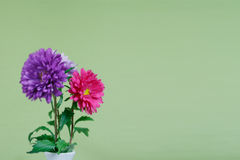 Bouquet of colorful chrysanthemums on a green Stock Photos