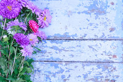 Bouquet of colorful chrysanthemums Stock Photography