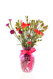 Bouquet colorful Dianthus Stock Image