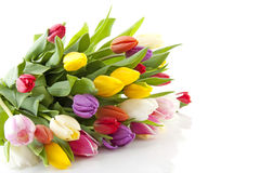 Bouquet of colorful Dutch tulips Stock Photo