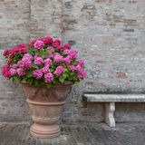 Bouquet of colorful flowers and a bench in a garden Italy Royalty Free Stock Photography