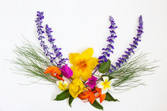 Bouquet of colorful flowers on white background Royalty Free Stock Photos