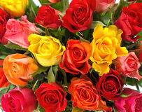 Bouquet of colorful fresh assorted roses Stock Images